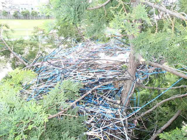 カラス駆除事例 樹木 巣の撤去5