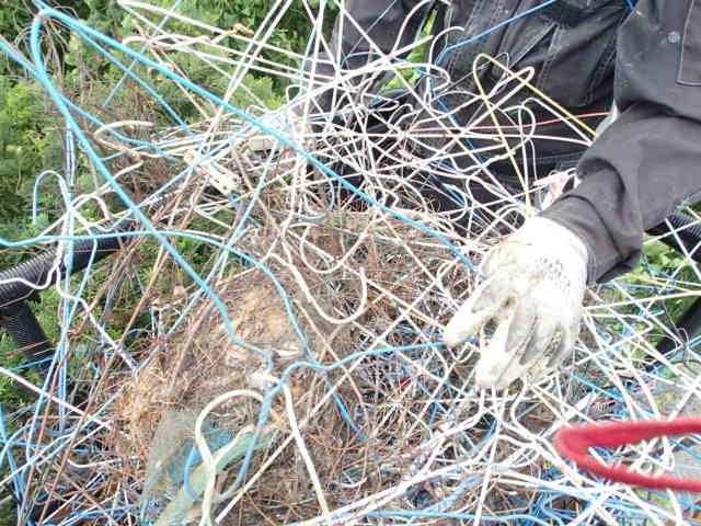 カラス駆除事例 樹木 巣の撤去11