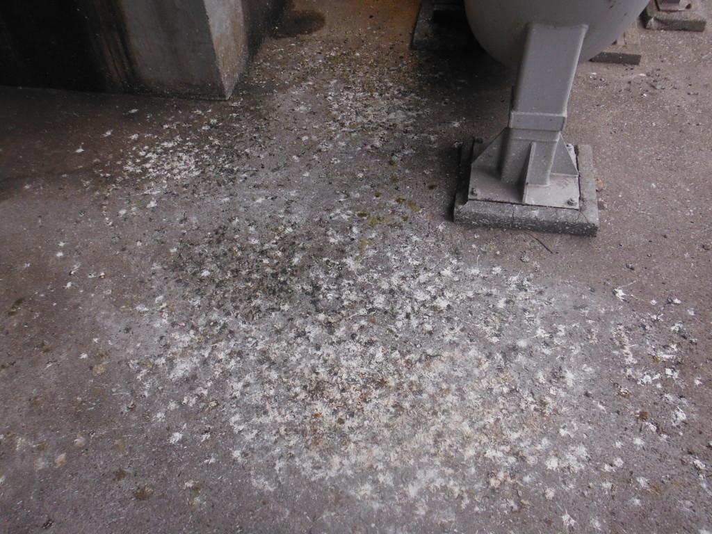 工場 糞害・清掃・消毒1-2