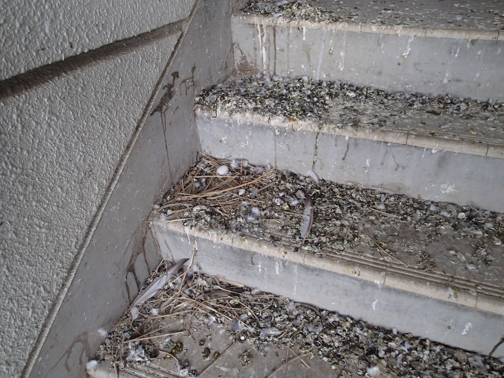 一般住宅 マンション 巣 糞害 清掃